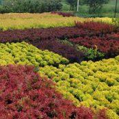 Прайс на листяні рослини