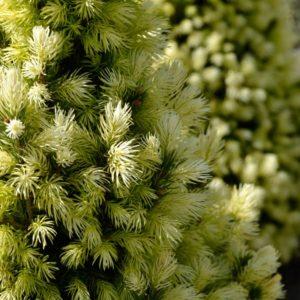 Прайс на імпортні рослини